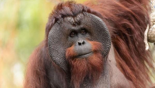 animals-with-longest-gestation-period-4