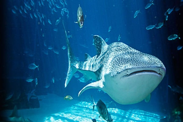 Largest fish tank in the world for Biggest fish in the world