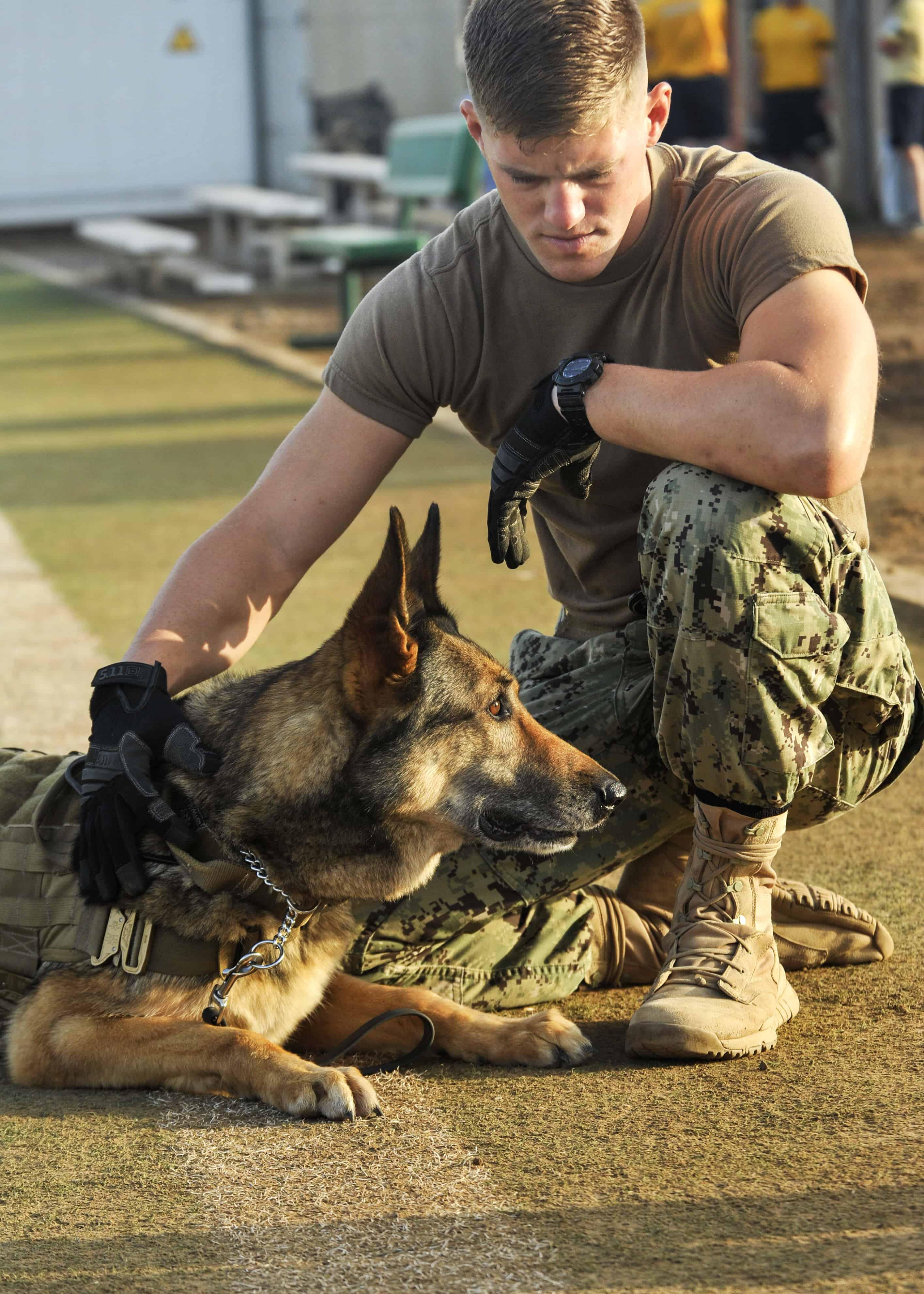 Military Service Dog Training