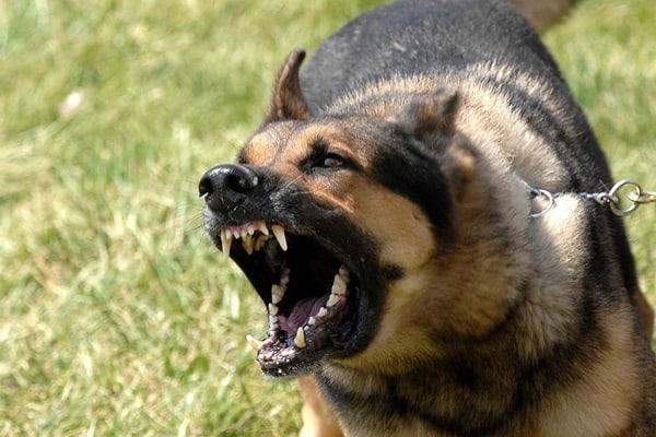 Best Dog Training For Barking