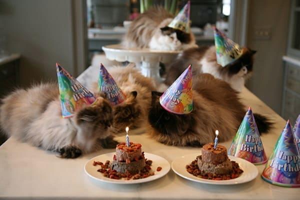 Homemade cake for cats recipe Food next recipes