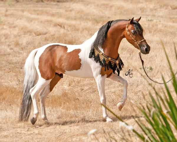 http://tailandfur.com/wp-content/uploads/2016/01/30-Cute-Miniature-Horses-Picture-6.jpg