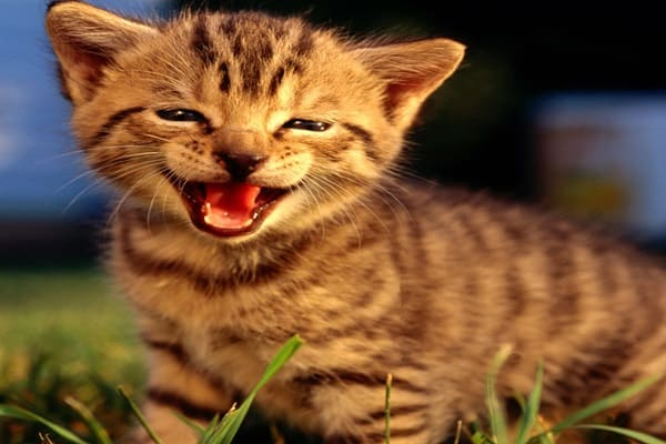 30 Beautiful and Cute Smiling Cat Pictures - Tail and Fur