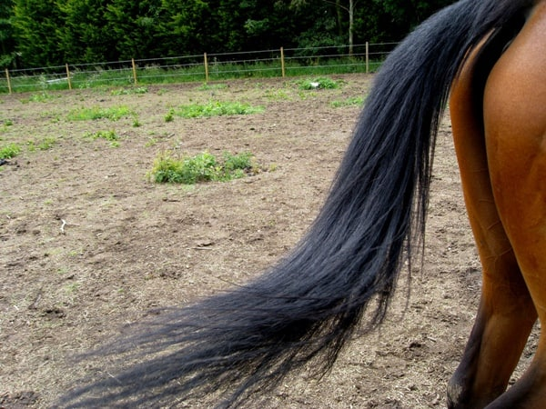 20 Tips for Healthy Horse Tail 2