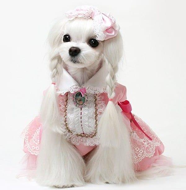 30 Dog Grooming Styles 4