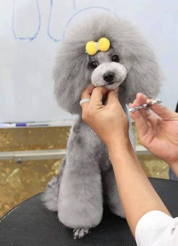 30 Dog Grooming Styles 7
