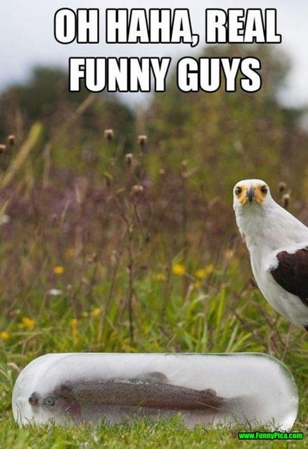 Funny Memes For Real : Crazy and funny bird pictures tail fur