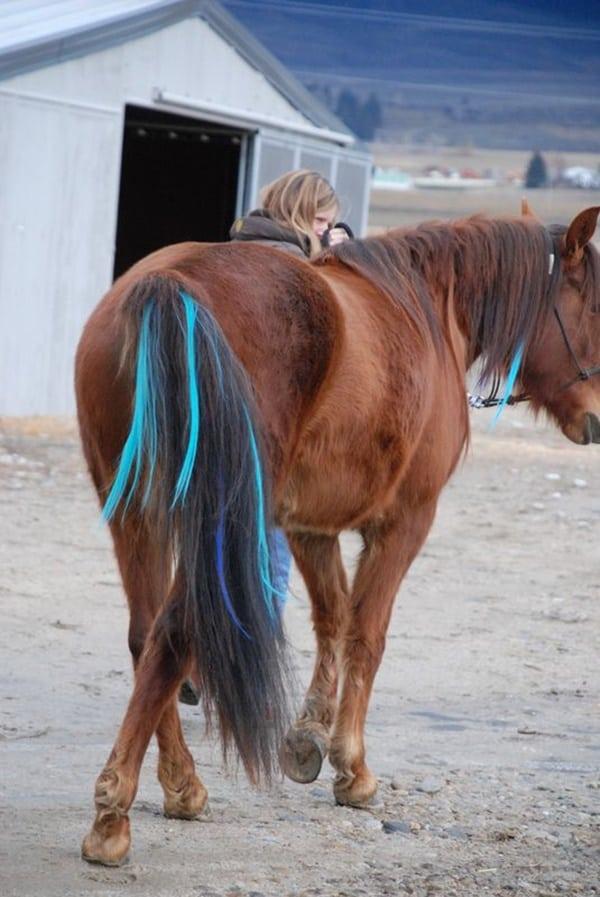 30 Horse Tail Braids Ideas 13