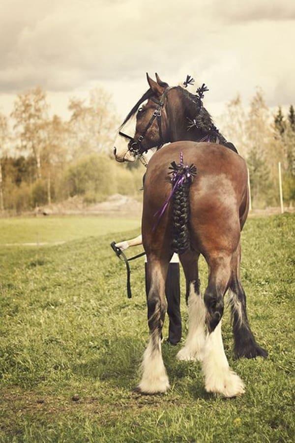 30 Horse Tail Braids Ideas 14