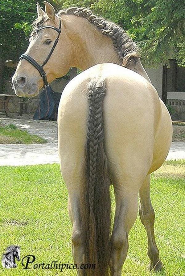 30 Horse Tail Braids Ideas 16