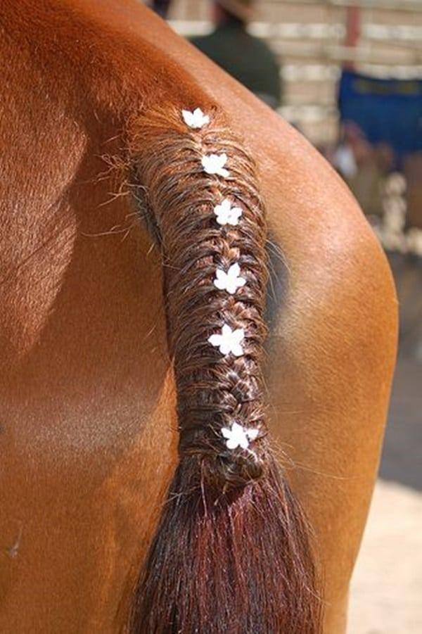 30 Horse Tail Braids Ideas 22