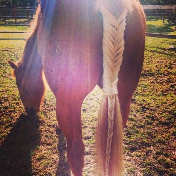 30 Horse Tail Braids Ideas 26