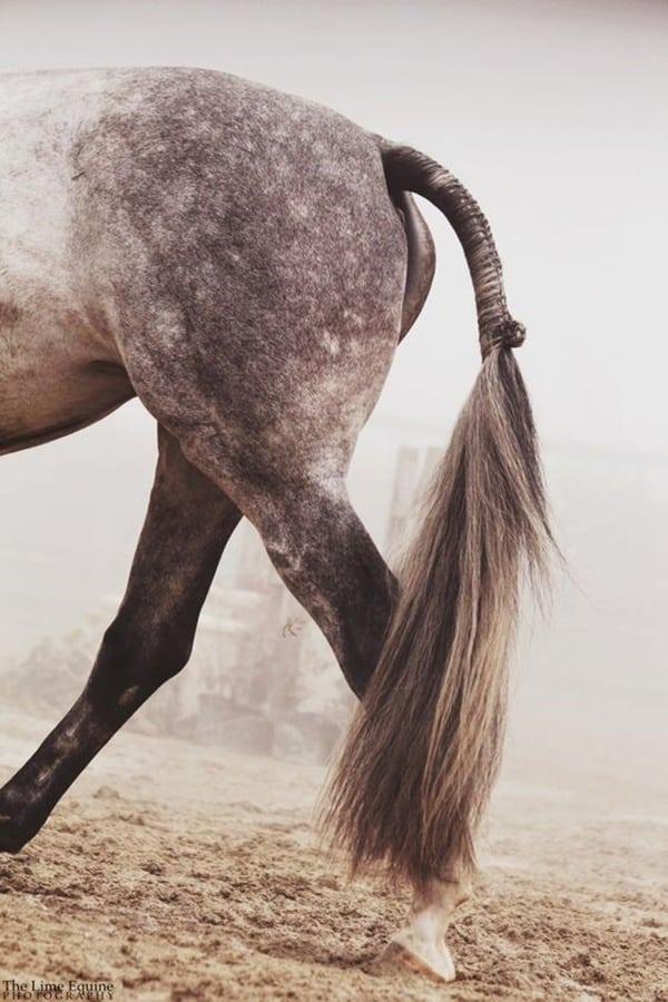 30 Horse Tail Braids Ideas 30