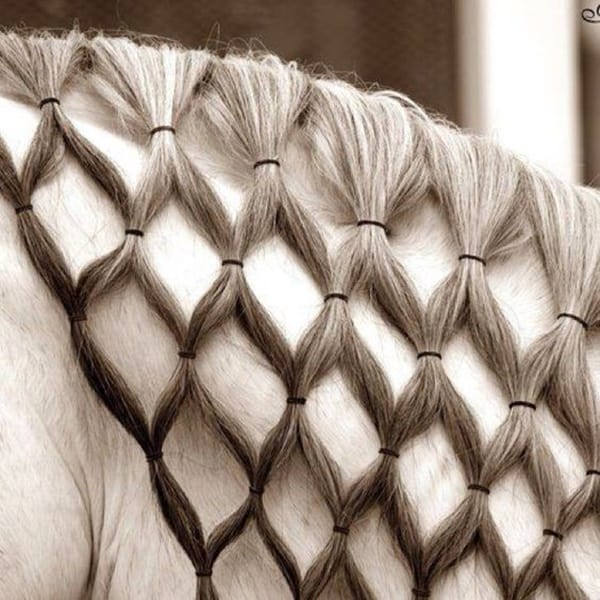 30 Horse Tail Braids Ideas 6