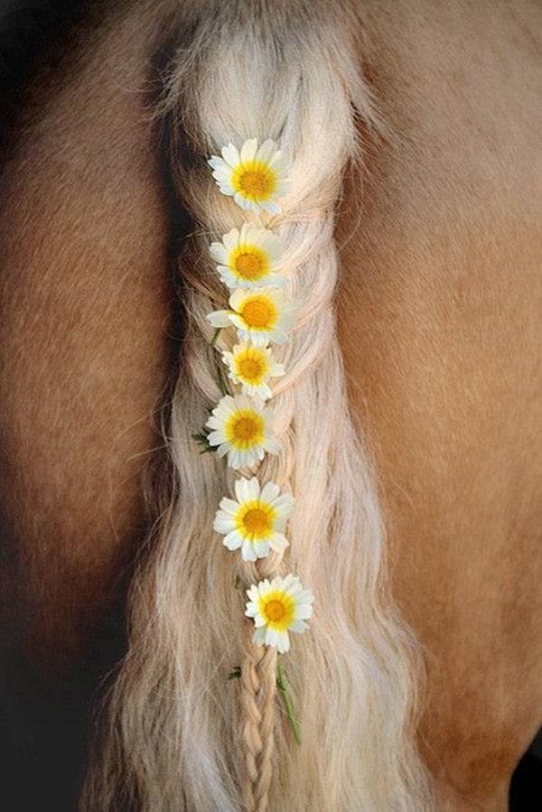 30 Horse Tail Braids Ideas 7