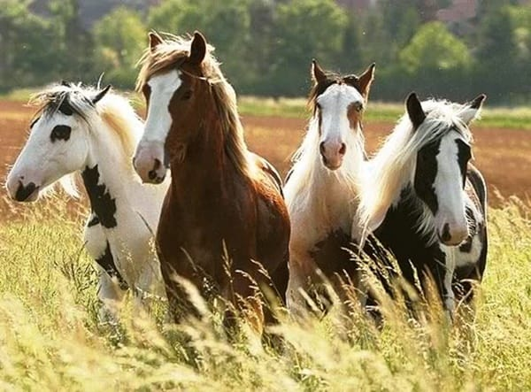 Causes of Sudden Death in Horses 1