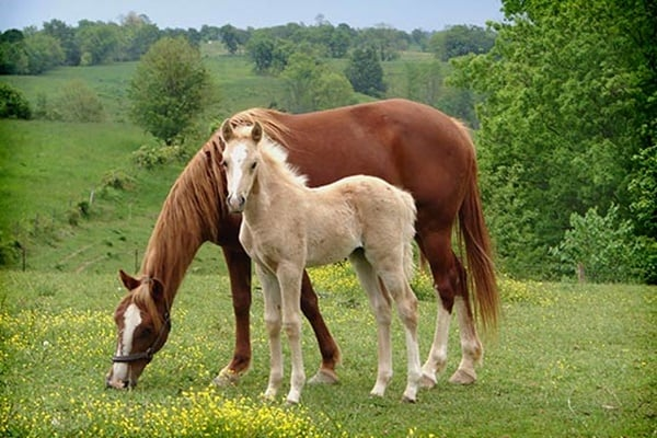 Causes of Sudden Death in Horses 3