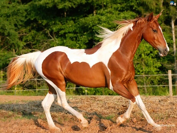 Causes of Sudden Death in Horses 4
