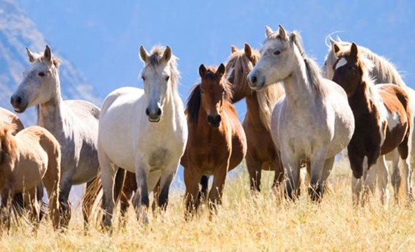 Causes of Sudden Death in Horses 5
