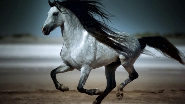 Causes of Sudden Death in Horses 6