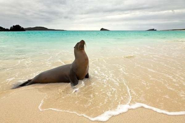 http://tailandfur.com/wp-content/uploads/2016/03/animals-enjoying-beach-1.jpg