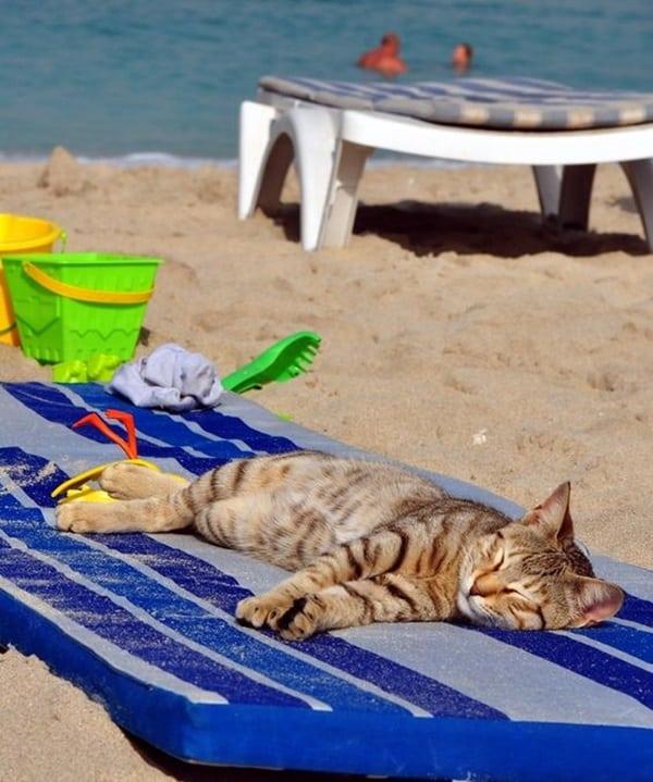 http://tailandfur.com/wp-content/uploads/2016/03/animals-enjoying-beach-10.jpg
