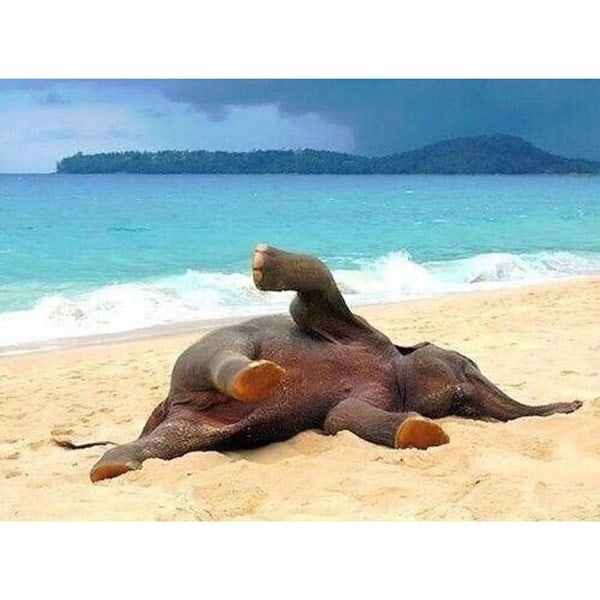 http://tailandfur.com/wp-content/uploads/2016/03/animals-enjoying-beach-2.jpg