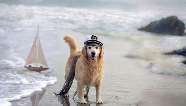 http://tailandfur.com/wp-content/uploads/2016/03/animals-enjoying-beach-3.jpg
