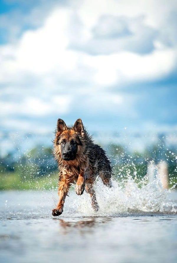 http://tailandfur.com/wp-content/uploads/2016/03/animals-enjoying-beach-4.jpg