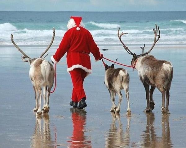 http://tailandfur.com/wp-content/uploads/2016/03/animals-enjoying-beach-5.jpg