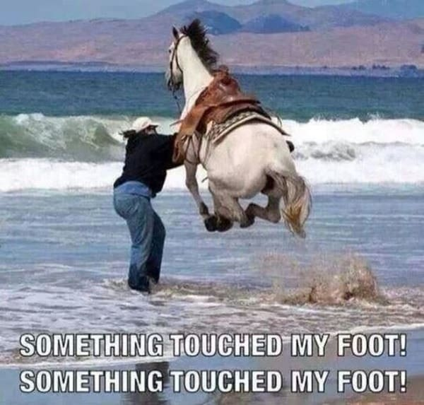 http://tailandfur.com/wp-content/uploads/2016/03/animals-enjoying-beach-7.jpg