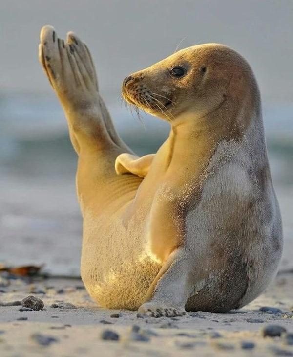 http://tailandfur.com/wp-content/uploads/2016/03/animals-enjoying-beach-8.jpg