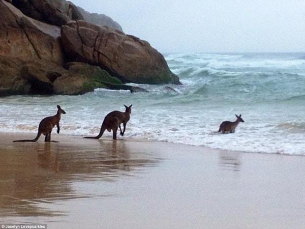 http://tailandfur.com/wp-content/uploads/2016/03/animals-enjoying-beach-9.jpg