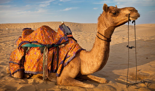 Interesting Facts About Camel Raising - Tail and Fur