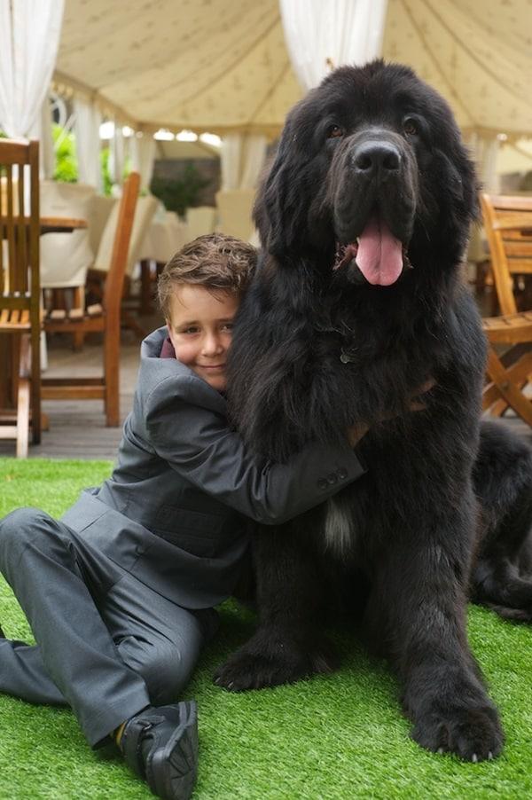 DogsTrust Honours 2013