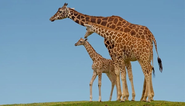 15 Animals with Longest Motherhood After Humans 14