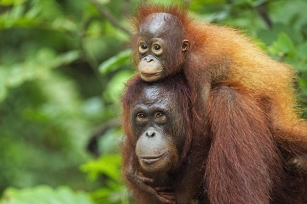 15 Animals with Longest Motherhood After Humans 2
