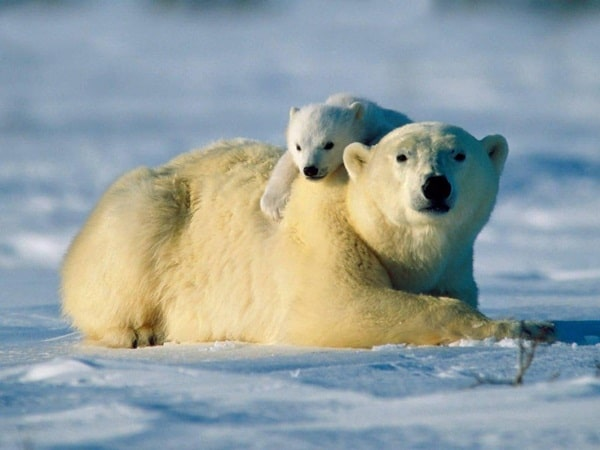 15 Animals with Longest Motherhood After Humans 4