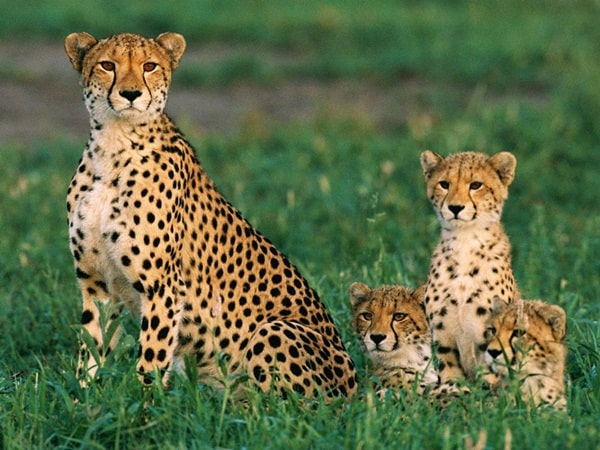 15 Animals with Longest Motherhood After Humans 8
