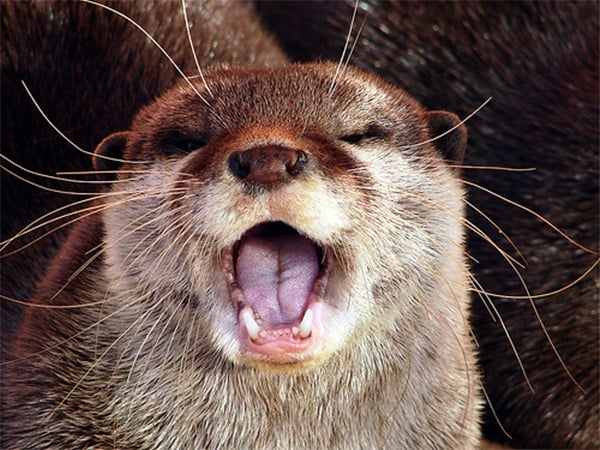 40 cute otter pictures tail and fur