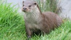 40 Cute Otter Pictures Feature Image