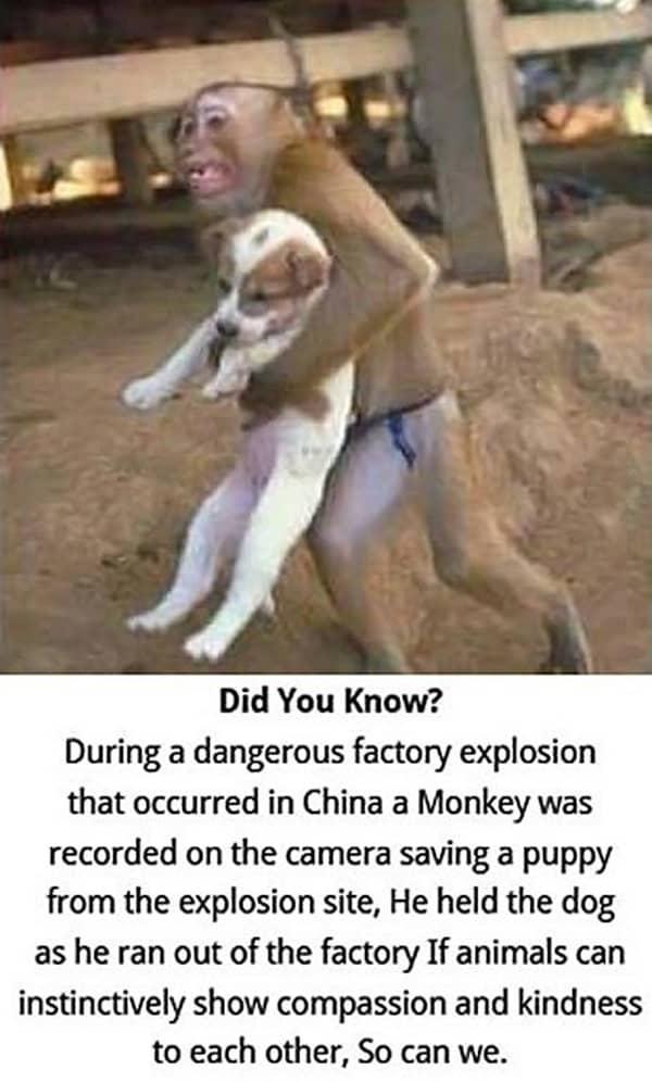 10 Heart Touching Animals Stories 10