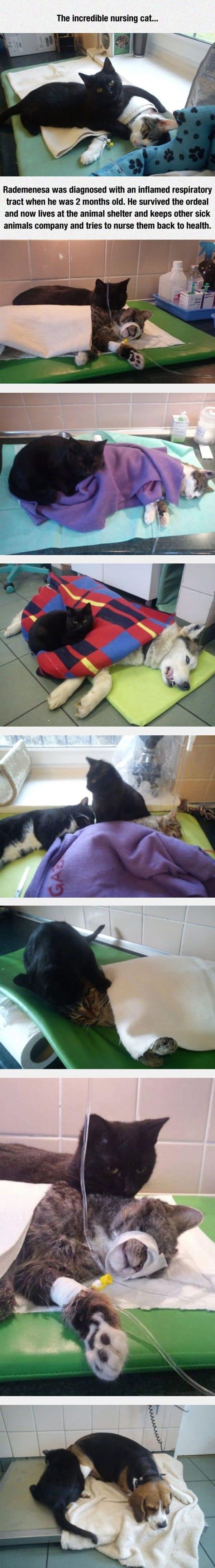 10 Heart Touching Animals Stories 6