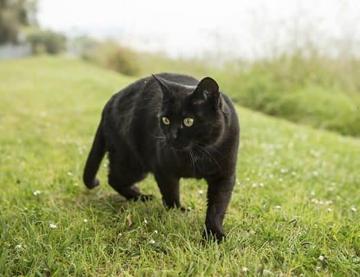10 Popular Superstitions about Black Cats Feature Image
