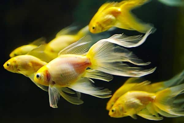 Exotic Tropical Fish Related Keywords & Suggestions - Exotic Tropical ...
