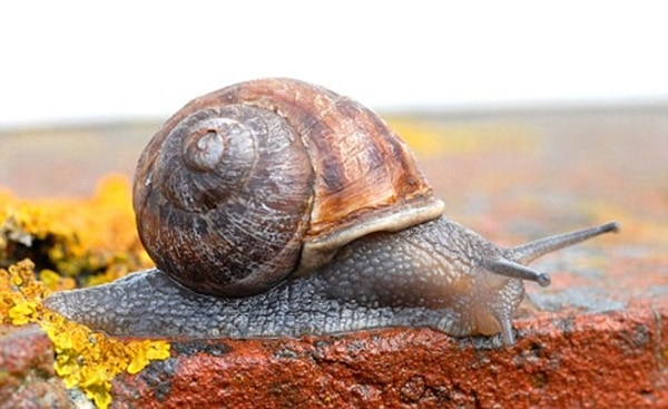 how to stop snails eating your plants