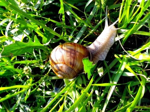 45 Pictures Of Snails And Slugs