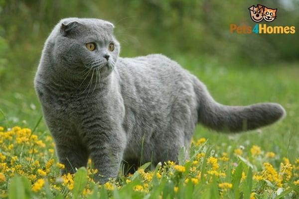 10 Best Smartest Cat Breeds 6
