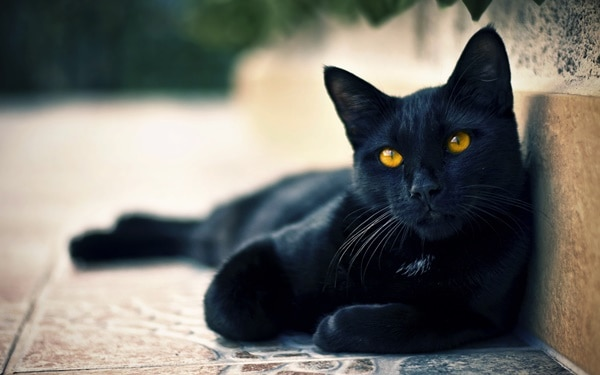 10 Popular Superstitions about Black Cats 1