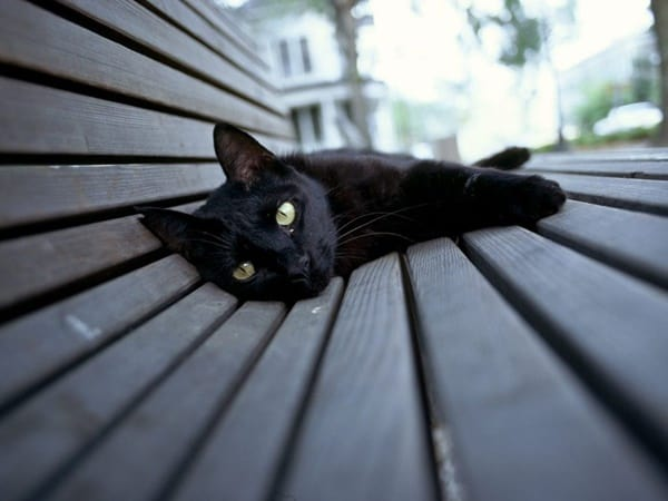 10 Popular Superstitions about Black Cats 3